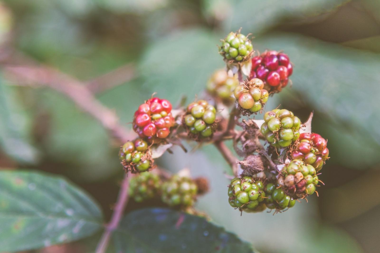 Zauberpflanzen: Waschen mit der Natur